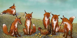 Cuánto zorro, pobres gallinas - Elvira García Piñeiro