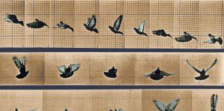 La paloma de Kant - Pedro Insua