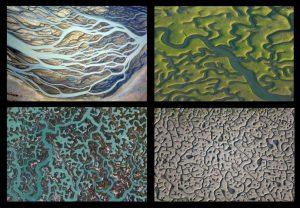 La vida tiene geometría fractal - 5